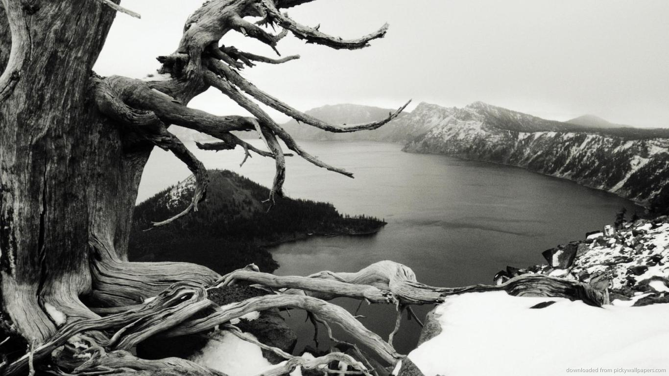 bw-snow-and-tree